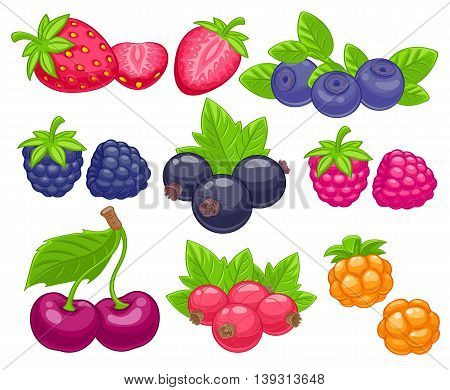 Assorted berries set vector illustration. Sweet juicy strawberry cherry blueberry raspberry black and red currant bilberry cloudberry isolated on white background.
