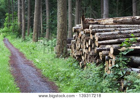 Stack of wood and a footpath in the woods