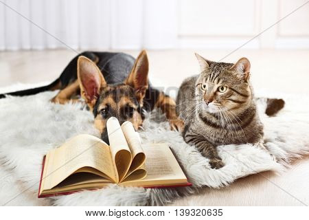 Cute cat and funny dog with book on carpet