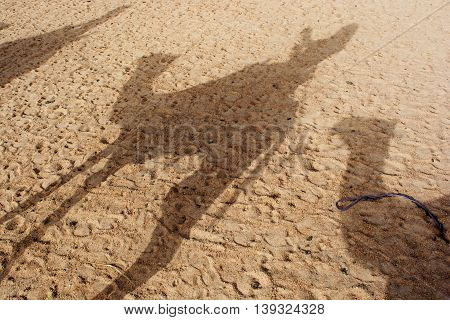 Camel shadow on the sand dune in Sahara Desert.