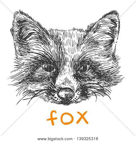 Beautiful hand drawn vector illustration sketching of fox. Black and white drawing. Use for postcards, print for t-shirts, posters, tattoo