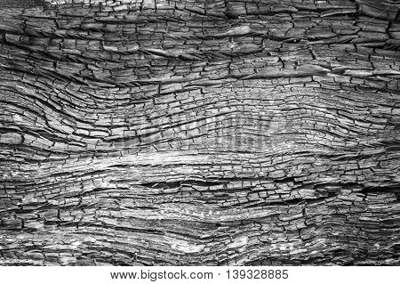 abstract wood charcoa fire burn Texture for background