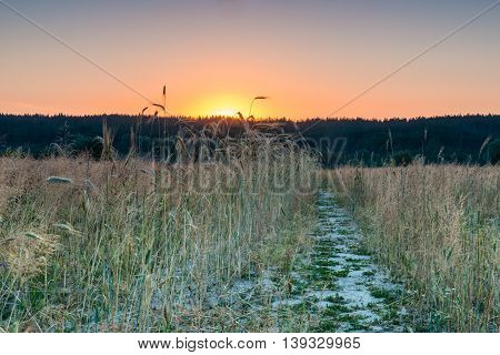 Dawn in a wheat field. This photograph was taken at dawn in a field near Kiev.