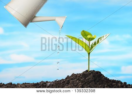 Sprout watered from a watering can on sky background