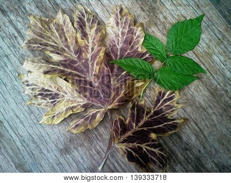 The large leaves of burdock with green leaf raspberry.