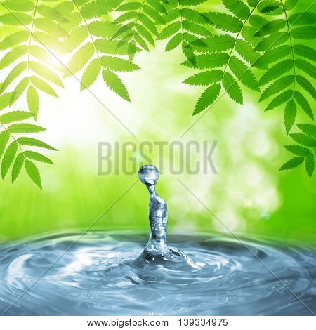 Spring green leaves of tree above the water level. Natural background.