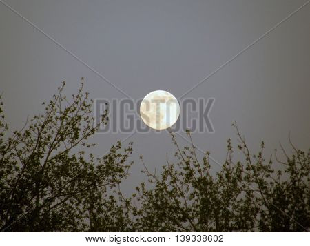 Full moon in the night sky against a background of tree branches.