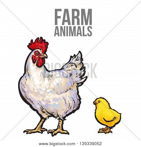 white with yellow chicken, sketch hand-drawn illustration isolated on white background, chicken mom and baby chick, farm bird family, bird farm
