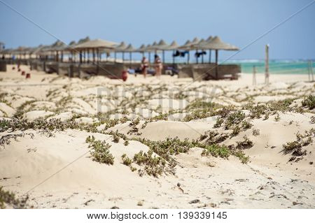 Landscape view of a sandy beach with sunbeds at tropical luxury hotel resort with sand dunes in foreground