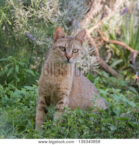 small cat sitting in colorful garden. pets