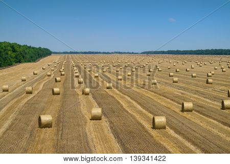 Big dry field after harvesting with stacks of collected wheat at hot summer day
