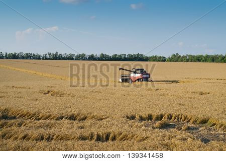 Modern harvester harvests wheat field on sunny hot day during harvest time