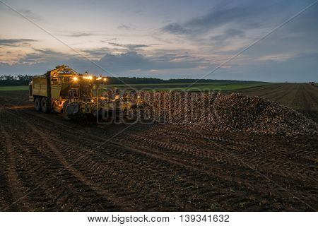 Machine with illumination for loading of sugar beet are on field in summer evening