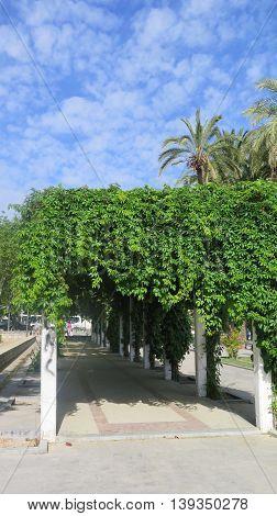 Overgrown Pavillion In Jaen