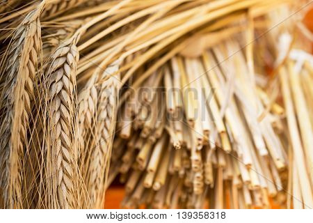 sheaf of barley on the wooden desk