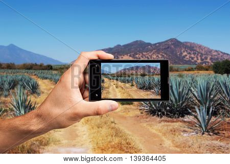 Hand with cellular taking a photo of a tequila landscape