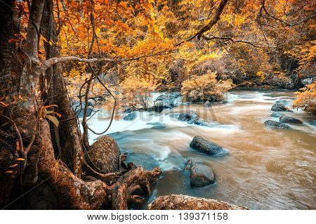 Autumn forest with motion blur of flowing mud river moving through rocks. It came from big waterfall inside the jungle.