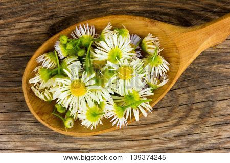 petals of chamomile in wooden spoon on the old board in the cracks. view from above close-up. top view closeup