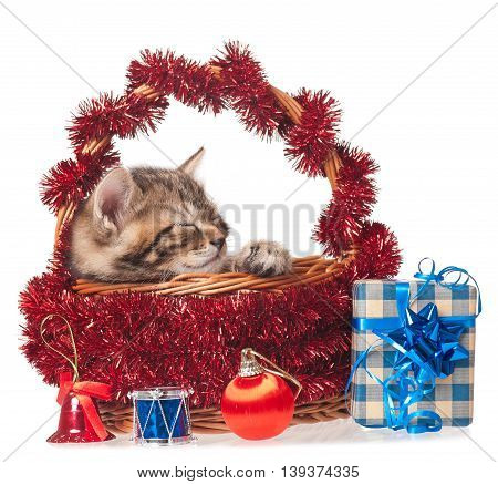 Cute asleep kitten with New year garland and toys isolated on white background