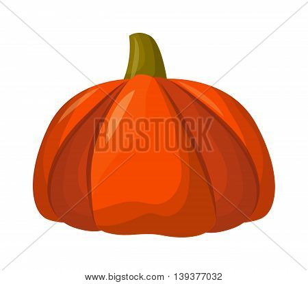 Autumn pumpkin vegetable design. Pumpkin oriental bittersweet vector illustration. Orange halloween pumpkin vegetable collection. Harvest symbol season decoration.