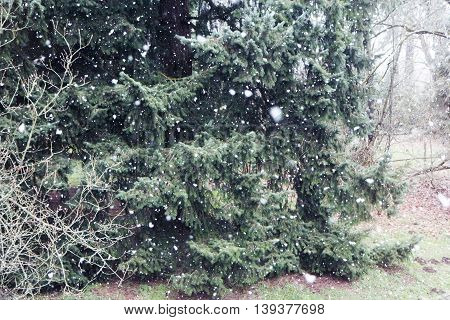Winter snow with forest, snowstorm with tree