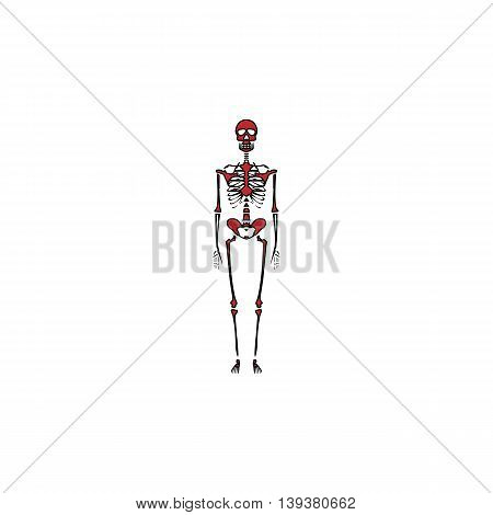 Skeletons - human bones. Red flat simple modern illustration icon with stroke. Collection concept vector pictogram for infographic project and logo