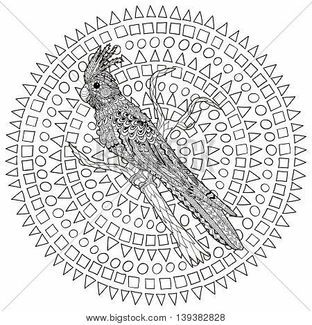 High detail patterned illustration in zen tangle style. Adult coloring page for antistress art therapy. Parrot corella on the branch. Template for t-shirt, tattoo, poster or logo. Vector illustration.
