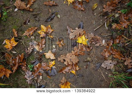 Beautiful autumn golden maple and oak tree leaves on the ground. Top view