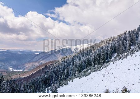 Panoramic View With Snow Covered Trees. Landscape Of Snow-covered Trees On Mountains With Beautiful
