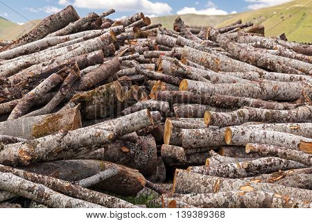 Tree logs cut and stacked in the meadow to make firewood. Horizontal.
