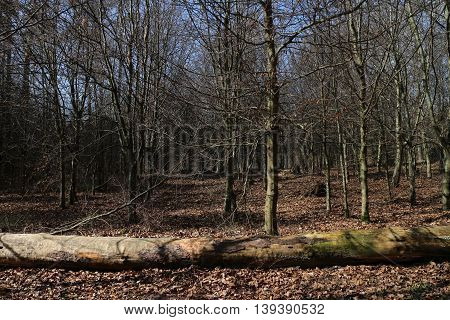 Cut down tree in the forest in autumn