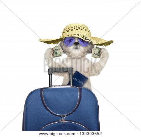 dog is going on a trip to travel with lots of money -- isolated on white