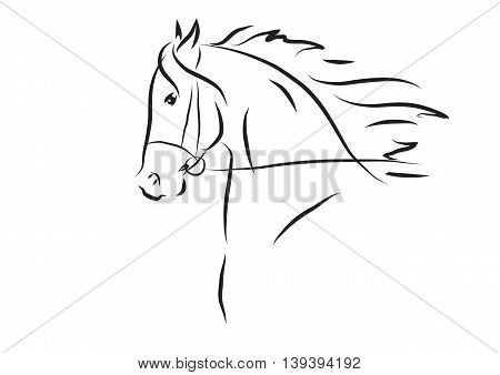 Vector illustration of black and white horse head