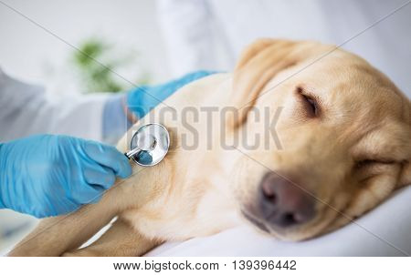 Vet specialist examination sick dog, close up