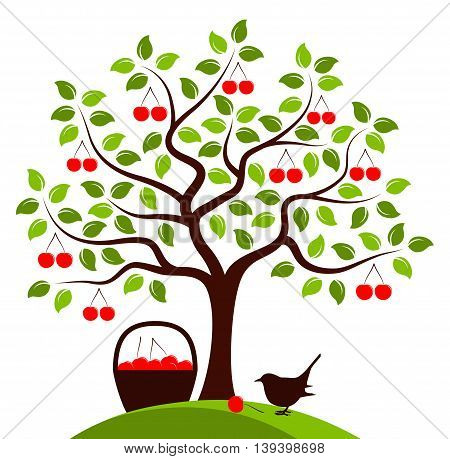 vector cherry tree, basket of cherries and bird isolated on white background
