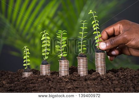 Person's Hand Holding Small Plant On Stacked Coins