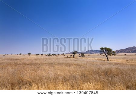 View of the savannah in Namibia Africa concept for traveling in Africa