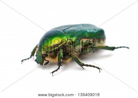 bronze green beetle on a white background