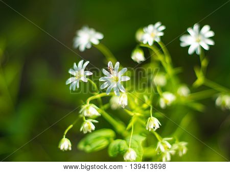 beauty flowers growing in a spring forest