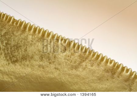 Megalodon Carchariae, Teeth