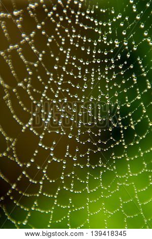 Close up of dew drop covered spider web, UK. Taken in my garden on an Octobers morning, the photo shows the dewdrops in focus in part and blurrey elsewhere, on a spiders web in my front garden of my home in West Yorkshire, UK.