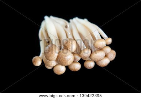 Mushrooms clump together on the Black background