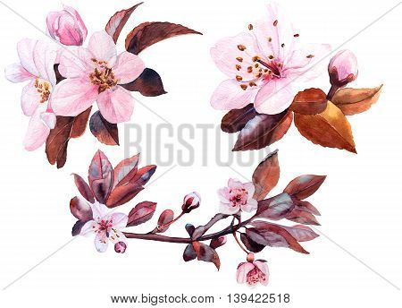 Watercolor hand drawn cherry flower set. Isolated organic natural eco illustration on white background