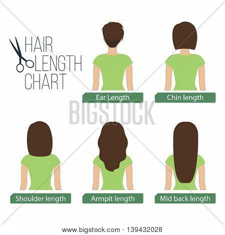 Hair length chart back view 5 different hair lengths. Vector.