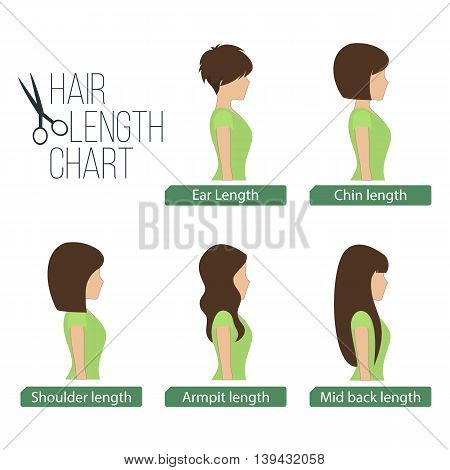 Hair length chart side view 5 different hair lengths. Vector.