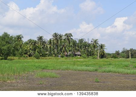 rural view in Vietnam with house and field