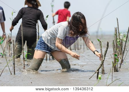Woman planting mangroves to reduce global warming prevent erosion along the banks.