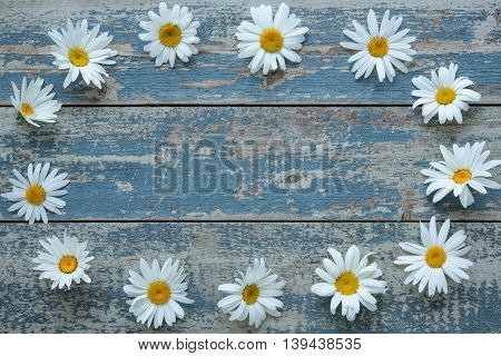 Frame of daisy flowers on blue painted wooden board