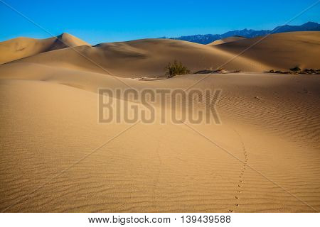 Hot autumn in Death Valley, California. Hot and windy morning in the desert. The soft curves of yellow sand dunes