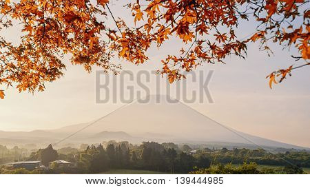 Beautiful view of Mount Fuji and field This mountain is an famous natural landmark of Japan